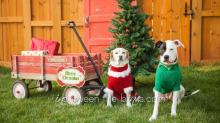 IMAGES: Christmas gifts for pets should be safe, fun