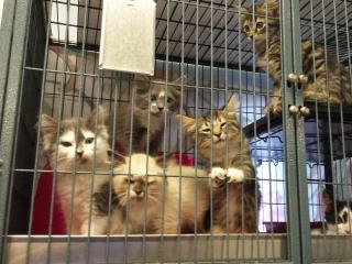 The Animal Protection Society of Durham is offering a special deal Tuesday that will help cat owners spay or neuter their feline friends.