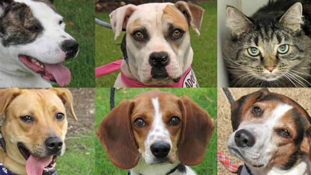 A few of the pets returned to the Wake County Animal Center. (Photos courtesy of WCAC)