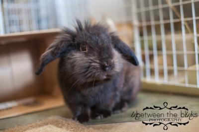 Photo courtesy of Wake SPCA