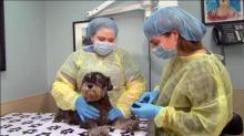 Vet: Dog parks, daycares are key in spread of dog flu