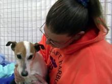 Program insures pets are comfortable in final days