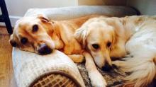 Monica Laliberte's dogs