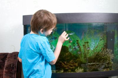 Want a pet, but have allergies? Fish are great alternative pets that offer significant health benefits and learning opportunities for the entire family. (Deseret Photo)