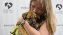 IMAGES: Clear the Shelters finds homes for hundreds of local animals