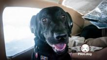 IMAGES: Rescue dog makes flight from SC to find Raleigh home
