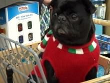 Average spending on pets' gifts rises to $62