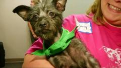 Special needs dogs to compete in Puppy Bowl