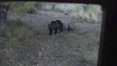 Bears outside school window