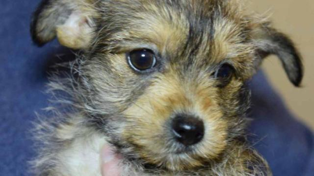 According to the organization, a Yorkie Chihuahua mix named Janet was taken from the shelter sometime during mid-afternoon on Saturday.