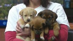Bundle of puppies up for adoption