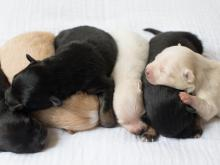 WRAL digital producer Jill Knight shared photos from the first weeks of life for her surprise litter of six.
