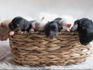 Surprise puppies