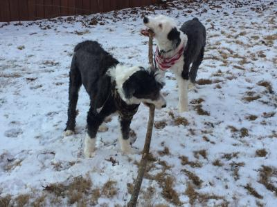 Lynda Loveland dog