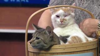 Kittens in a basket: March 26 Pet of the Day