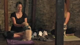 Downward dog? Furry friends join owners for yoga