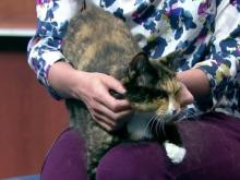 April 26, 2017 Pet of the Day
