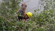 IMAGES: Clayton fire department rescues dog tangled in vines in river
