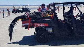 Crew wrangles 9-foot gator on beach