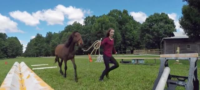 Hillsborough teen aims to tame, adopt wild mustang