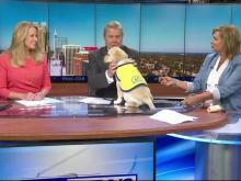 Bongo takes over the WRAL news desk