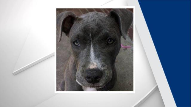 The Durham County Sheriff's Office is investigating after a puppy was stolen from a residential yard last month.