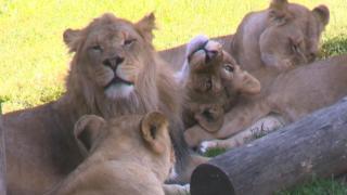 Zoo: Eclipse might cause odd animal behavior