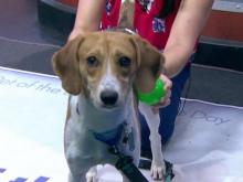 Aug. 15, 2017 Pet of the Day