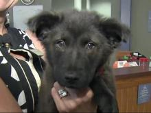 SPCA of Wake County gears up for Clear the Shelters