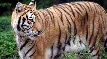 IMAGES: Carolina Tiger Rescue talks 'Tiger King,' coronavirus