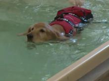 Water therapy helps ailing dogs recover