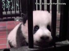 RAW: Panda bear gets name