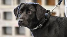 What happens to CIA dogs that don't make it through training