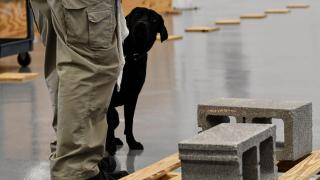 The tale of the bomb-sniffing CIA dog that wasn't interested