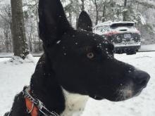 Pet photos, January 2018