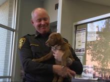 Crime-fighting pup honored