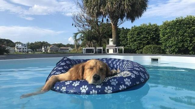 Raleigh hotel ranks among top 5 pet-friendly spots in NC