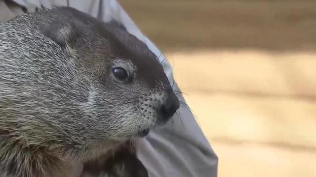 Garner's Snerd gives no hints about Groundhog Day decision
