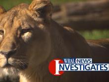 WRAL News Investigates exotic animal safety