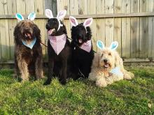 Pets celebrate Easter