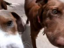 """Saving Grace: le centre de sauvetage des animaux du comté de Wake trouve un refuge pour les chiens de la """"dernière chance"""""""