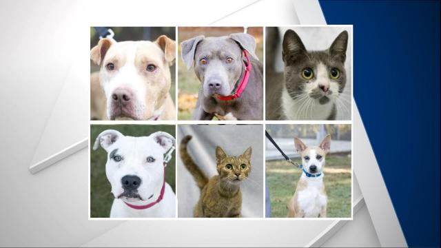 All these dogs and cats are waiting to be adopted at the Harnett County Animal Shelter.