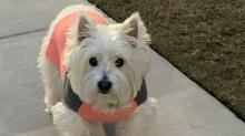 IMAGES: Meet the winners of WRAL's cutest pets contest