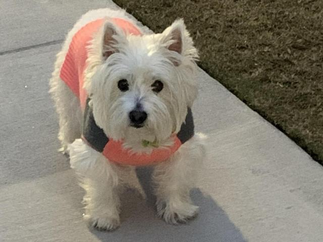 Diamond, a terrior, is one of WRAL's cutest pets