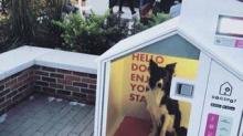 IMAGE: These Temperature-controlled Dog Houses Are A Genius Solution For People Running Errands With Their Dogs