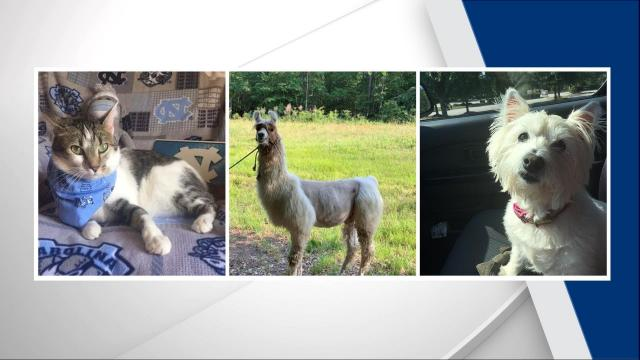 Meet the winners of WRAL's cutest pets contest