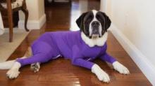 IMAGE: Shed Defender Dog Leotards Are Not Only Adorable—they Solve A Problem That Plagues Dog Owners