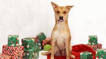 IMAGES: 12 dogs at the SPCA of Wake County need homes for the holidays
