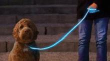 IMAGE: Light-up Leash Makes Late-night Dog-walking Safer