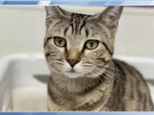 Pet of the Day - June 16, 2021